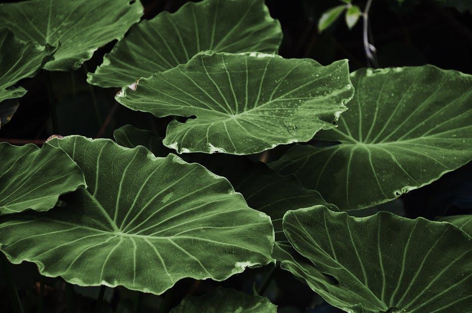 Leaf Spine